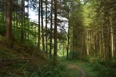 Path in the alpine forest. In Austria, near Admont royalty free stock photo