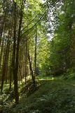 Path in the alpine forest. In Austria, near Admont stock photo