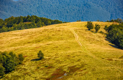 Path through alpine meadow on forest background Royalty Free Stock Images