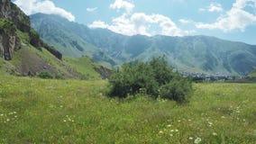 Path in alpine meadows stock video