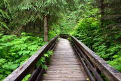 Path through the Ancient Forest Provincial Park in British Columbia Stock Photos