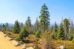 Path And Trees On The Brocken Royalty Free Stock Photos