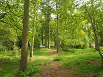 Path through an arboretum in spring. Path through the trees in an arboretum in spring with sunlight shining amongst the trees Stock Photos