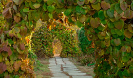 Path in arch of plants Stock Photography
