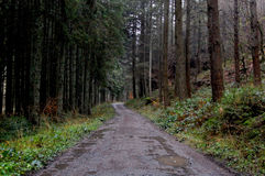 Path in the ardennes Royalty Free Stock Image