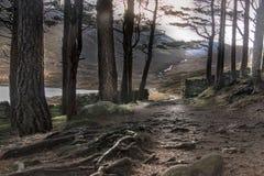 Path around Loch Muick. Cairngorms National Park, Scotland, UK. stock photo