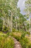 Path Through the Aspen Stock Image