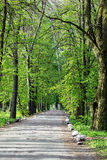 Path on the asphalt road through the green forest Royalty Free Stock Image