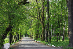 Path on the asphalt road through the green wood Stock Photos