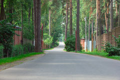 Path on the asphalt road through the pine-trees Stock Photography