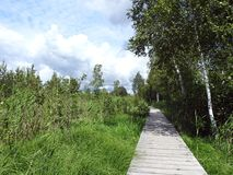 Path in Aukstumalos swamp in summer, Lithuania Royalty Free Stock Images