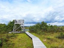 Path in Aukstumalos swamp in summer, Lithuania Royalty Free Stock Photo