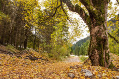 Path through Austrian Alpine Valey covered by leafs in autumn Stock Photo