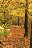 Path in autumn. Autumn road (path) through the forest backfilled with fallen leaves Royalty Free Stock Image