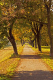 Path in Autumn Royalty Free Stock Photos
