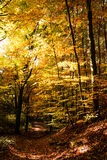 Path in autumn. Path in forest on a sunny autumn day Royalty Free Stock Image