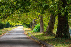 Path in autumn city park. Path near old trees stand in city park in earli autumn Stock Images