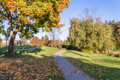 Path in an autumn city park with trees, fallen leaves stock image