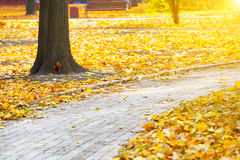 Path in the autumn city park Royalty Free Stock Photo