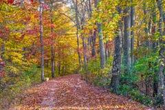 Path into Autumn Stock Image