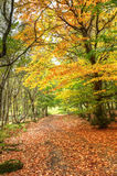 Path through Autumn Fall colorful forest Royalty Free Stock Photos