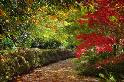 Path in autumn filled with dappled light and colour Stock Photos
