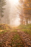 Path in autumn foggy forest stock photos