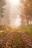 Path in autumn foggy forest Stock Photos