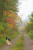 Path in an autumn forest Royalty Free Stock Photos