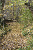 PATH THROUGH AUTUMN FOREST Stock Photography