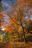 Path through autumn forest Stock Photos