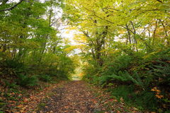 Path in autumn forest Stock Image