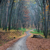 Path in autumn forest. A path in a forest in the autumn Stock Images