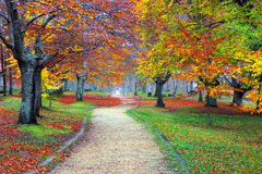 Path in autumn forest. Path in the autumn forest Royalty Free Stock Image