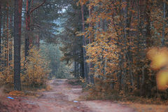 Path in the autumn forest Royalty Free Stock Image