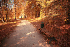 Path in the autumn forest Stock Photo
