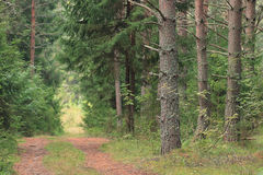 Path in the autumn forest Royalty Free Stock Photography