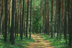 Path in the autumn forest Royalty Free Stock Images