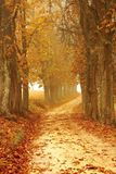 Path through autumn forest