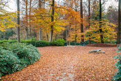Path is in the autumn forest with amazing colors and leaves Royalty Free Stock Photography