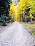 Path in Autumn forest of Aspens Royalty Free Stock Image