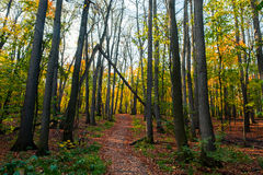 Path in the autumn forest. Path in beautiful autumn forest Royalty Free Stock Photos