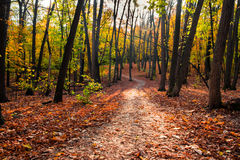 Path in the autumn forest. Path in beautiful autumn forest stock image
