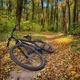 The path in the autumn forest and the bike hardtail. Bicycle lying on the ground in the forest Stock Image