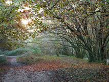 Path in the autumn forest stock photography