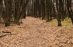 Path in the autumn forest. The path in the autumn forest is covered with fallen leaves Stock Photos