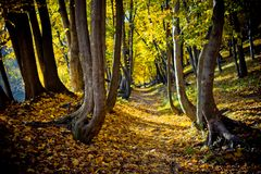 The path through the autumn forest is covered with yellowed leaves. Beautiful sunny nature view. The path through the autumn forest is covered with yellowed Royalty Free Stock Photo
