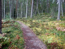 The path in the autumn forest Royalty Free Stock Image
