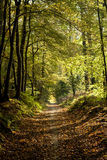 Path in an autumn forest Royalty Free Stock Image