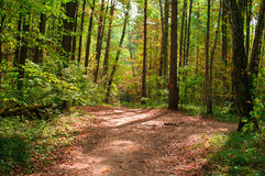 Path in autumn forest Stock Images